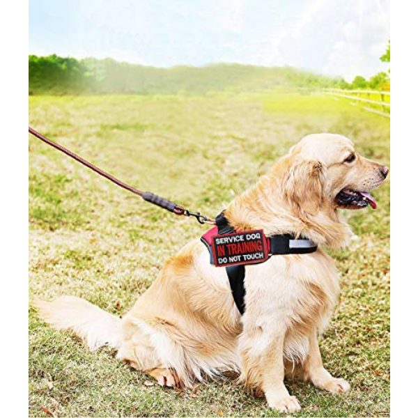 Ehope Airsoft Morale Patch 5 Patch Service Dog in Training Do Not Touch Vests/Harnesses Emblem Embroidered Fastener Hook & Loop Patch(Service Dog in Training-5)